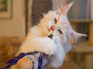 Banner uno Diez juegos para gatos, fáciles y entretenidos