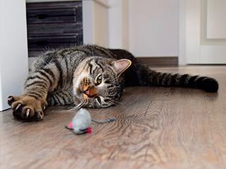 Banner dos Diez juegos para gatos, fáciles y entretenidos